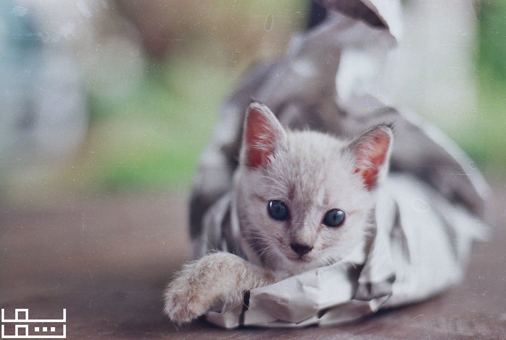 Wrapped Kitteh