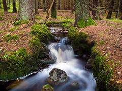 Smooth (dubbelt_halvslag) Tags: wood longexposure blur green nature wet water weather canon landscape woods long exposure raw sweden schweden natur calm sverige scandinavia vatten bohusln strmstad g10 nsinge lngexponeringstid