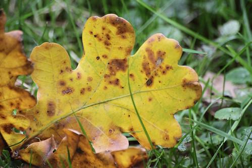 2010 herfstkleuren