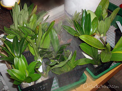 Gothenburg International Orchid Show 2010 - day 1