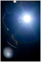 Rockstar (@chenbrimac) Tags: luz contraluz luces diego silueta sombras chen micrfono chn loading21