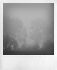 another time (nardell) Tags: morning autumn trees mist fall fog pa westchester iphone everhartpark treesinfog shakeitapp cellularlife hipstamatic first2shotsshakeitapp 2ndtwoshotshipstamatic