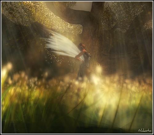 Wood's Fairy