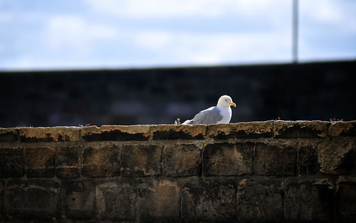 Seagull On The Harbour Wall