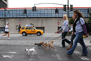 Women walking with their dogs during Strut Your Mutt in NYC