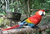 One of the cheeky Macaws