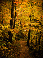 Path to Autumn (hflowers) Tags: autumn autumnfoliage trees fallleaves fall leaves minnesota forest landscape woods glow path fallcolors autumnleaves autumncolors fallfoliage foliage northshore duluth chesterpark