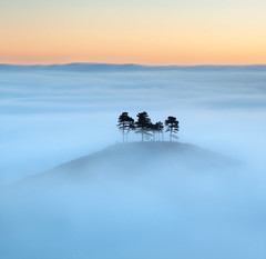 One Step Closer to Heaven (Tony Gill) Tags: blue trees mist yellow fog sunrise landscape island dawn heaven peace hill calm dorset isolation bridport colmershill