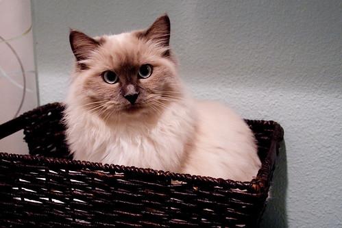 kitten in a basket!