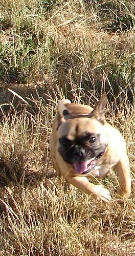 Running_Violet
