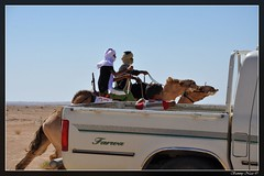 best seat to watch the camel race (Sammy Naas) Tags: festival libya ghadames    tuareq ghadamis  teniri  tuwareq