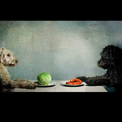 Are you sure this is a 'green steak'? (looby d) Tags: dogs photoshop textures cabbage sausages strobist petphotographer waggingtails loobyd wwwwaggingtailspetphotographercouk