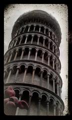 Ferkel vor dem schiefen Turm von Pisa