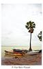 Ocean Souls (✪ delta_mizan ) Tags: ocean tree nature water canon landscape boats sand rocks pebbles palm bangladesh riverscape 450d maowa