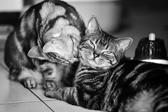 (  ) Tags: cat nikon m42  135mm  d700 tair11a