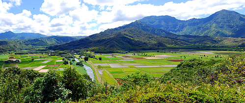 Taro fields, near Hanalei, HI
