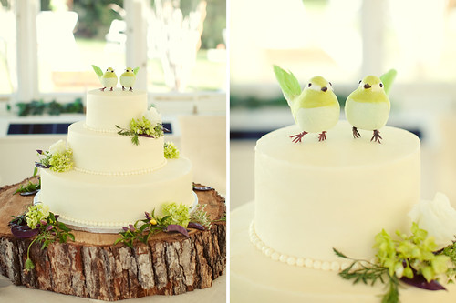 jodi miller pc cake birds love