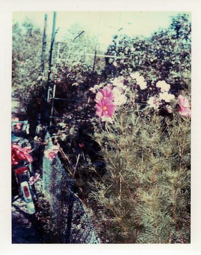 Der Garten auf Polaroid