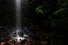 Ray of Light (Jesse4870) Tags: park light fern tree green water rain gold coast waterfall log rainforest flood south twin australia falls east erosion boulders national queensland lots everywhere springbrook