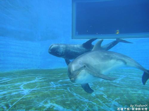 海豚雙飛(2)