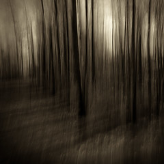 (Jeff Gaydash) Tags: trees blackandwhite abstract forest square landscape michigan icm intentionalcameramovement