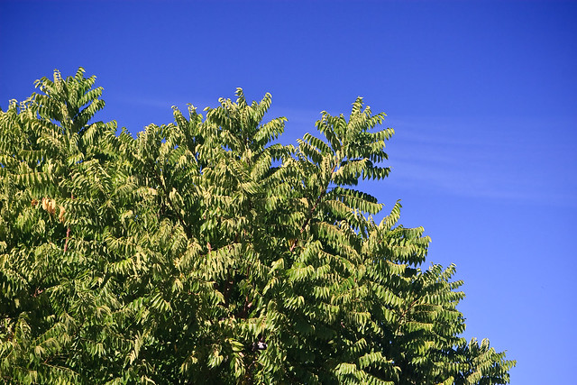 Green Tree and Sky