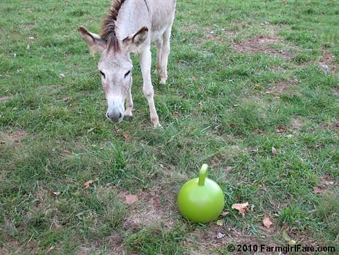 Donkey Ball 13