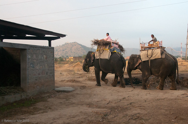 RYALE_Elephant_Village-40