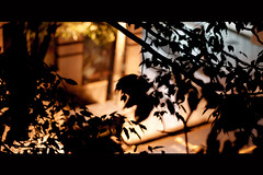 Mystery (Marlon Max) Tags: street trip travel shadow brazil max colour canon cores amigo 50mm weird remember colours south sombra stuff alegria ragga cor marlon trabalho viajem horizonte urbanas colorido undergroud ausencia southamericantour ysplix flickrestrellas marlonmax storybehindimage flickrawardgallery sojosedosburitis yreporterdiarock maxmarlon