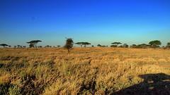 Serengheti National Park Tanzania (Dan Cosmin) Tags: serengheti tanzania kenya safari ngorongocrater africa landscape forest rainforest nature green plants view panoroama