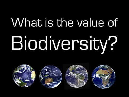 What is the value of biodiversity?