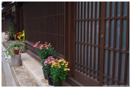 Naraisyuku (Flowers) 101023 #02