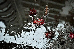 Dirty Autumn (maurococi) Tags: november autumn red fall leaves rain foglie puddle novembre autunno pioggia pozzanghera