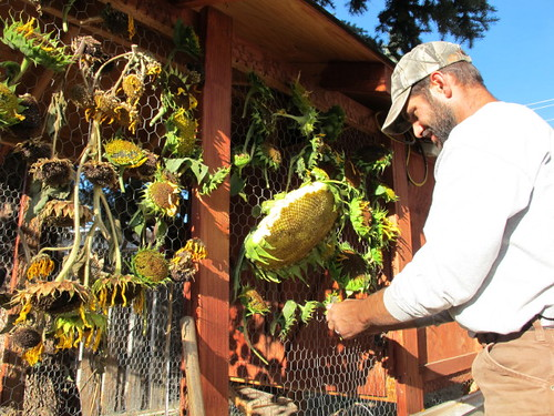 More sunflower weaving