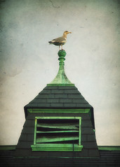cupola bird (lucy.loomis) Tags: school roof sky seagulls building bird textures cupola administration hyannis