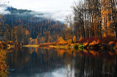 Fall on the Coeur d'Alene River (Deby Dixon) Tags: morning autumn mountain fall nature water fog river outdoors photography nikon colorful moody idaho foliage serene birch deby allrightsreserved 2010 calmwater tamaracks naturephotographer coeurdaleneriver idahopanhandle debydixon idahophotographer debydixonphotography