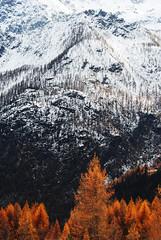 Le colline hanno gli occhi - The hills have eyes. (sinetempore) Tags: trees orange mountain snow alberi neve montagna arancione champorcher