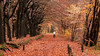 Dutch Autumn 2010 (DolliaSH) Tags: autumn fall colors leaves canon season topf50 herfst topf150 autunno topf100 haust 70200 syksy podzim kleuren bladeren jesen herfs lautomne 100faves 50faves 150faves canoneos50d canonef70200mmf4lisusm dollia dollias sheombar dolliash eceh