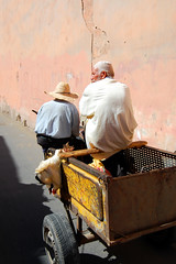 Marrakech, Morocco (Lucy Jamieson) Tags: africa travel travelling chicken culture morocco arab marrakech marrakesh cart moroccan nikond40 lucyjamieson