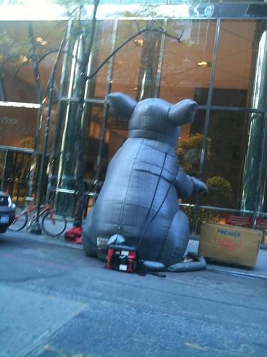 rat 5