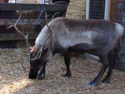 Santa's Reindeer Roundup at Big Thunder Ranch