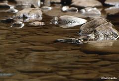 Marls (Quim Castilla) Tags: water stone ro river landscape agua graphic piedra quimcastilla