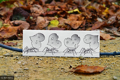 Pencil Vs Camera - 39 (Ben Heine) Tags: autumn light wallpaper blur macro art fall love sol nature leaves paper insect print lens creativity photography idea focus picnic poem branch dof floor heart pov hormigas walk lumire ant group ground file pebbles sharp queue anatomy series worker concept lover copyrights biology flou feuilles pattes ecosystem formica branche saintvalentin cailloux fallinlove formiga karnca luminosity fourmi mieren ameisen formicidae theartistery 200mmlens  saintvalentinesday roughdrawing creativecomposition benheine mrwkowate drawingvsphotography formcidos flickrunited samsungimaging nx10 katiegabrielle pencilvscamera imaginationvsreality