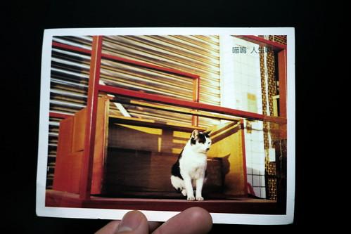 點點印明信片-from toro