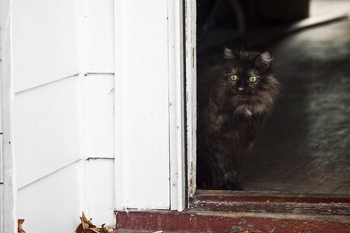 Agoraphobic Cat