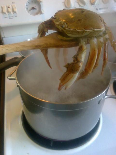 Keelhauled crab