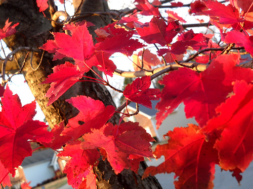 013: Bright red leaves