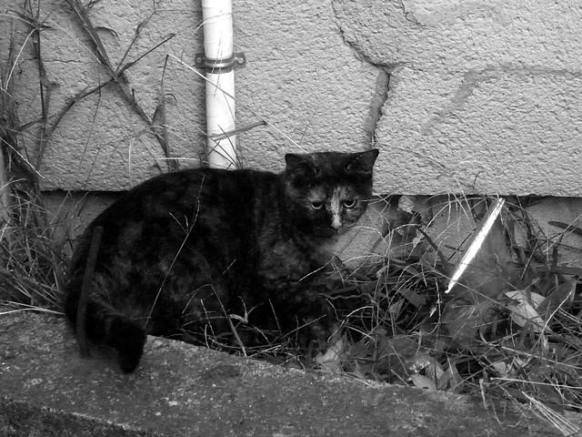 Today's Cat@2010-11-25