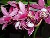 RBG FLOWER (ianharrywebb) Tags: plants edinburgh rbg iansdigitalphotos glasshouseflowers rbgflower yahoo:yourpictures=nature
