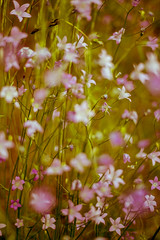 Mellow (mripp) Tags: art kunst vintage poster flowers nature natural retro leica m summilux 50mm
